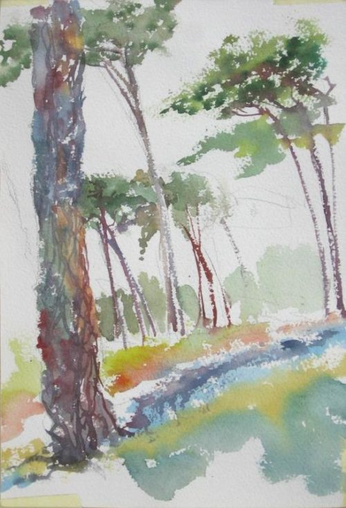 A painting of the famous Spanish pines at Rhodes Memorial.