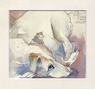 watercolour of a Jack Russel