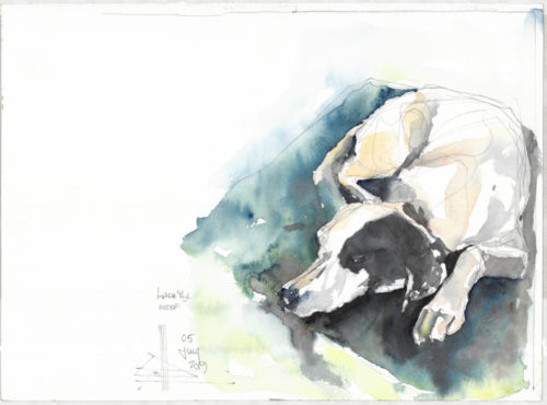 watercolour of a little dog