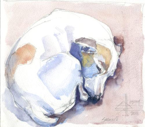 watercolour of a sleeping dog