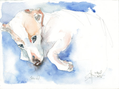 Watercolour of a Jack Russell
