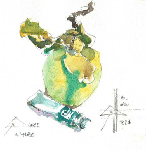 Render in watercolour - make it intriguing - picture of a quince