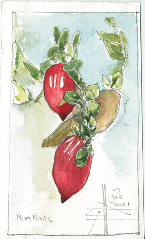 Render in watercolour - make it intriguing - watercolour of num num