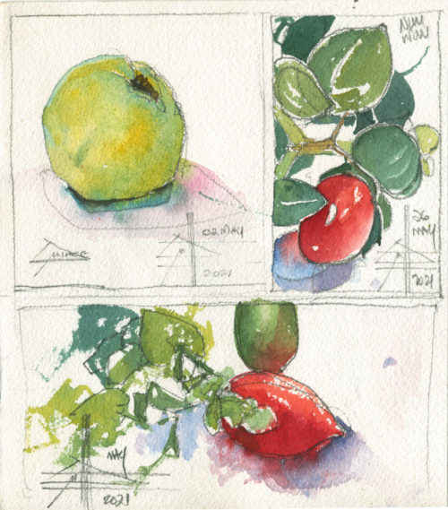 photo of a quince and carissa - Render in watercolour - make it intriguing
