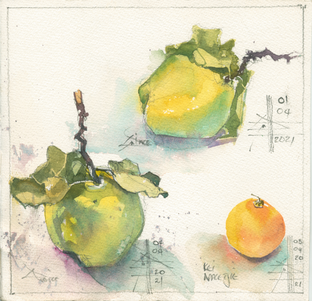 Render in watercolour - make it intriguing - picture of quince and kei apple