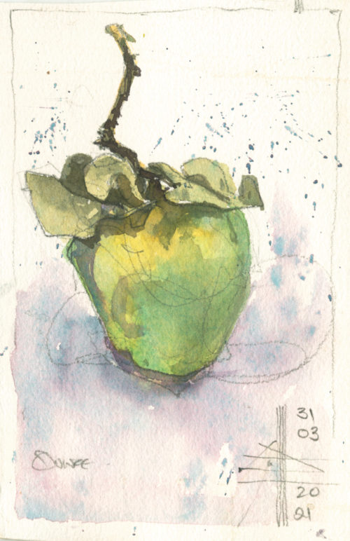 picture of a quince - Render in watercolour - make it intriguing